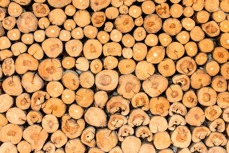 Tree stumps background royalty free stock images
