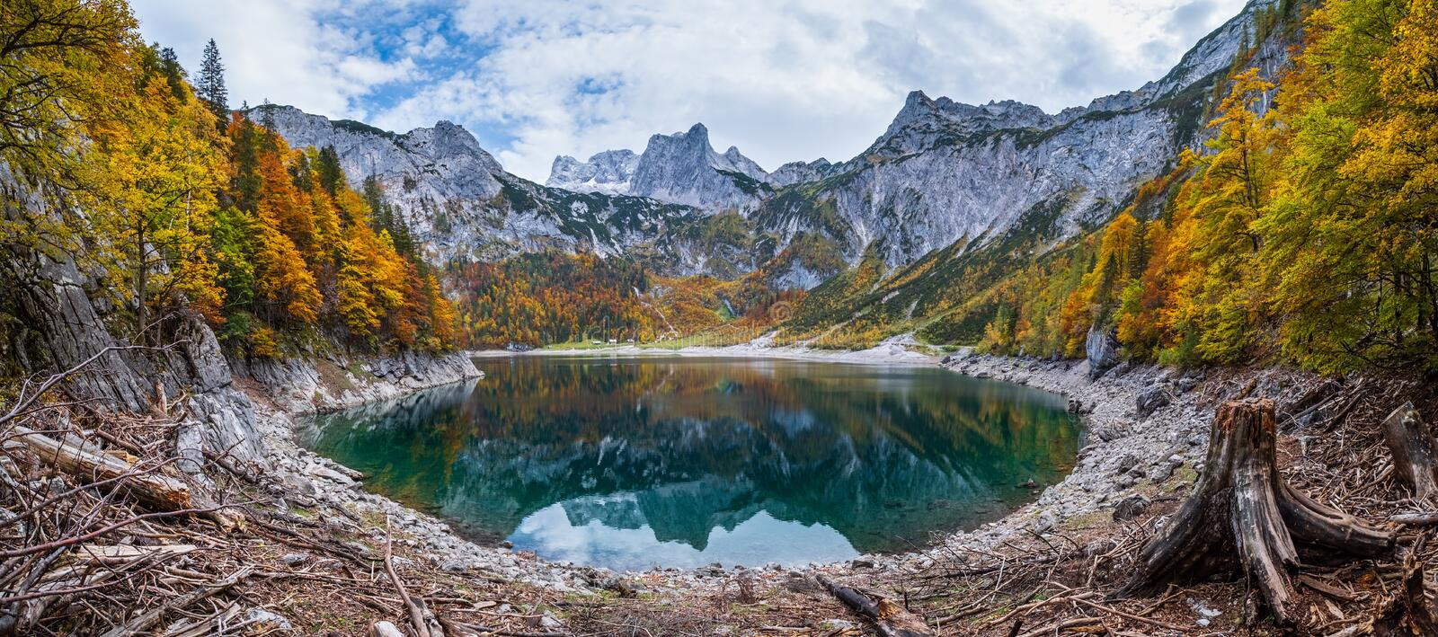 Tree stumps after deforestation near Hinterer Gosausee lake, Upper Austria. Autumn Alps mountain lake with clear transparent water royalty free stock photos