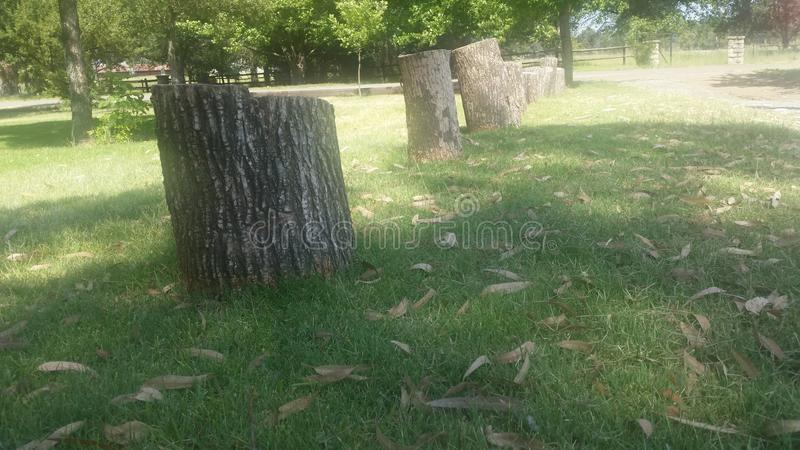 Tree stumps. Growing on the rise again royalty free stock photography