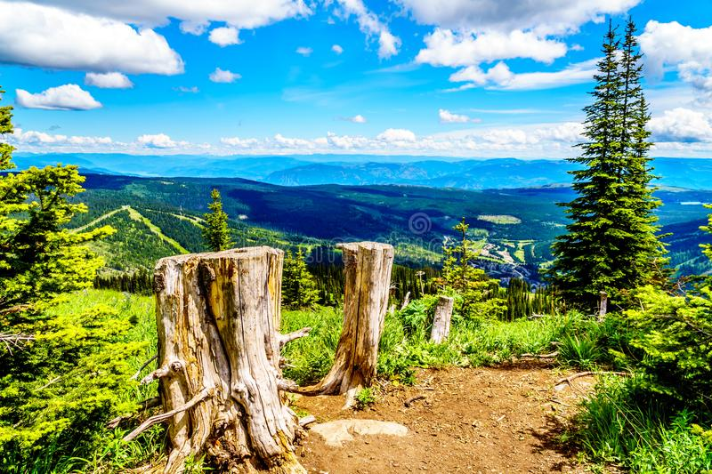 Tree Stumps on a hiking trail on Tod Mountain near the alpine village of Sun Peaks in the Shuswap Highlands of British Columbia royalty free stock photo