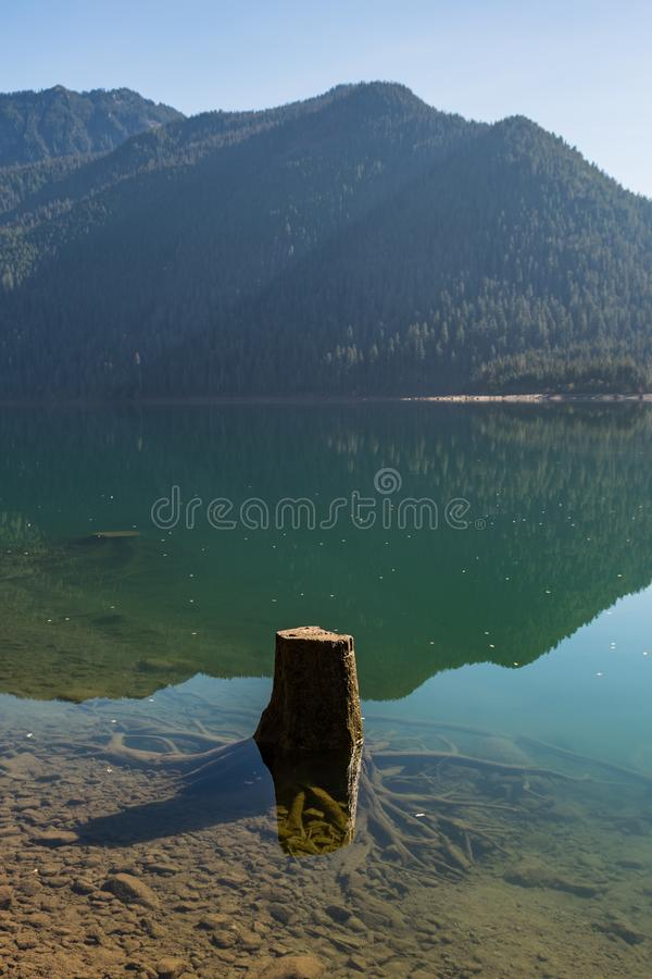 Tree stumps partially submerged in the clear water of Baker Lake in North Cascades. Washington, USA royalty free stock images
