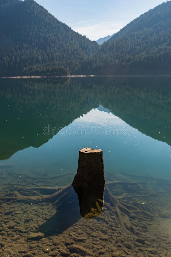 Tree stumps partially submerged in the clear water of Baker Lake in North Cascades. Washington, USA stock photography