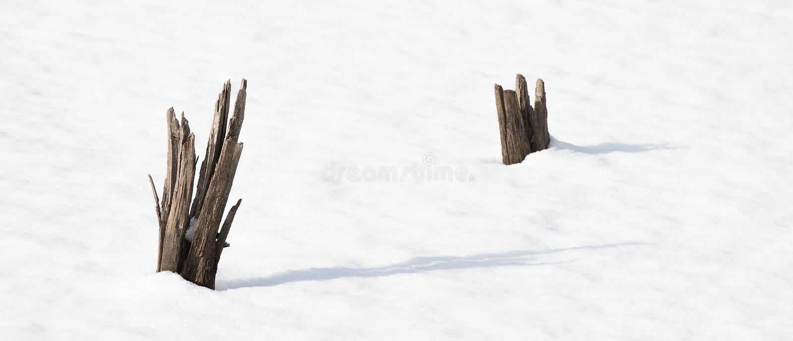 Download Tree Stumps In Snow Covered Pond Stock Image - Image: 83720527