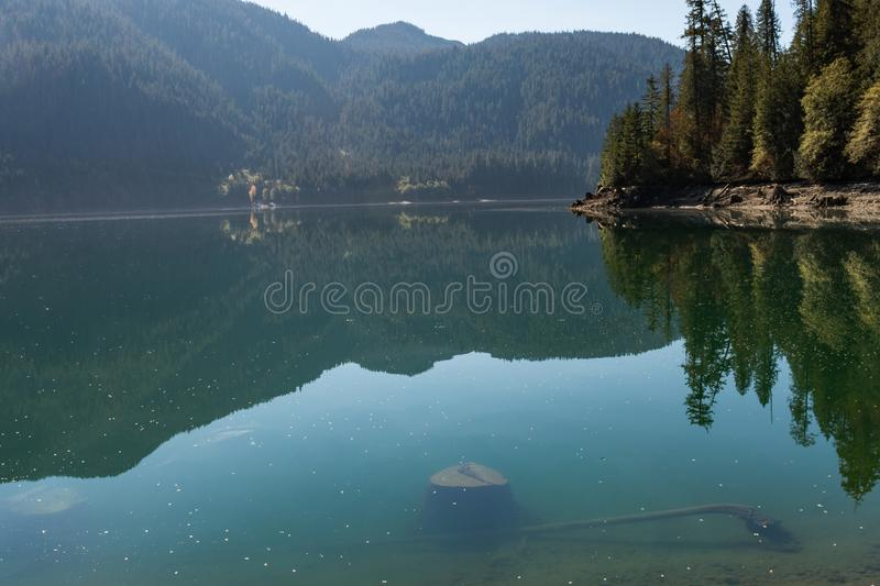 Tree stumps submerged in the clear water of Baker Lake in North Cascades. Washington, USA stock image