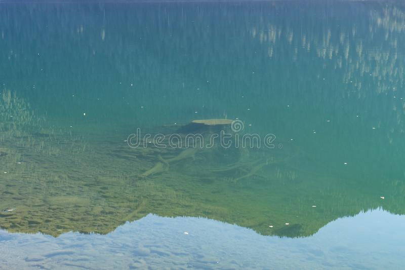 Tree stumps submerged in the clear water of Baker Lake in North Cascades. Washington, USA royalty free stock photos