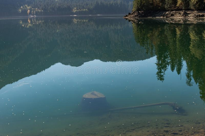 Tree stumps submerged in the clear water of Baker Lake in North Cascades. Washington, USA stock images