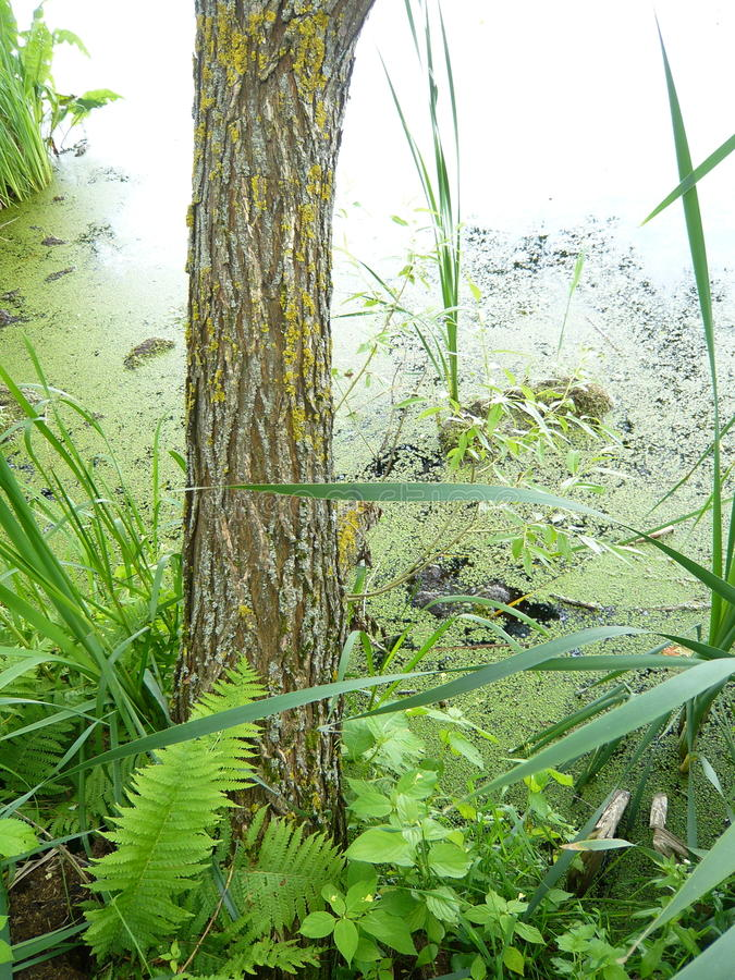 Tree and summer green plants in a pond royalty free stock photos