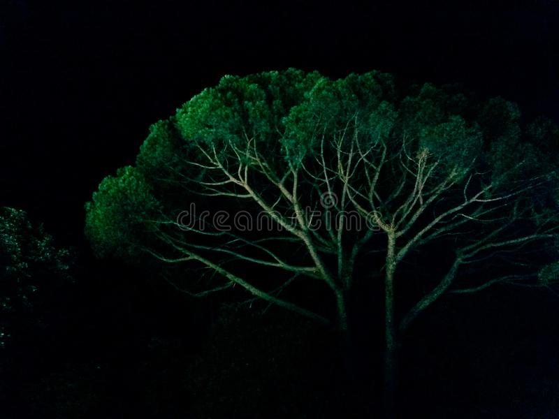 Tree in a summer night stock photo