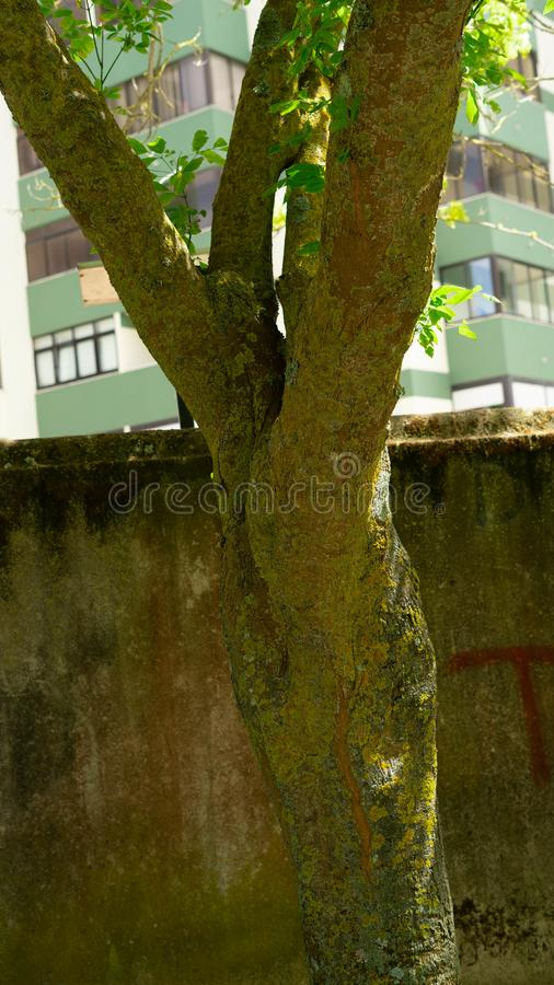 Tree in the summer , Portugal. This image it is about a detail found in garden stock images