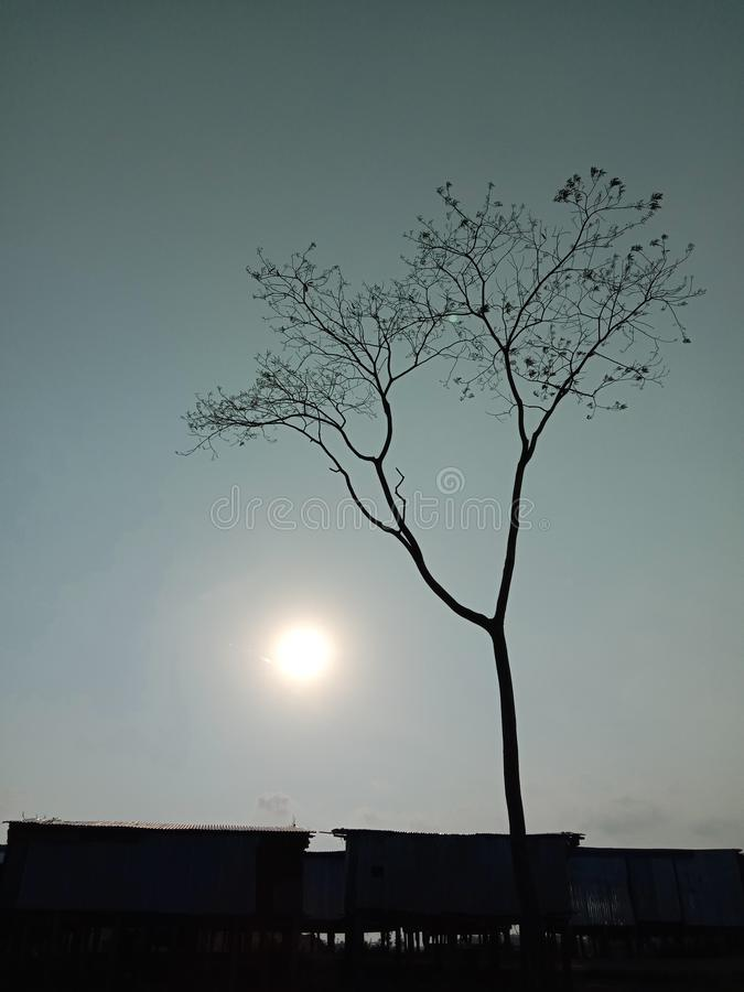 A tree with the sun royalty free stock photos