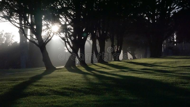 Tree sun. Golf course tree silhouette in the park at stock photos