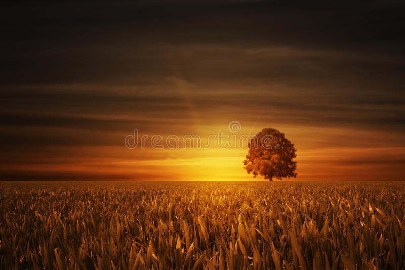 Download Tree With Sundown Royalty Free Stock Image - Image: 14454656