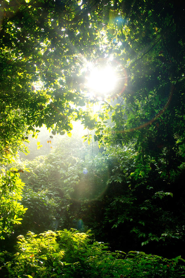 Tree And Sunlight Royalty Free Stock Photography