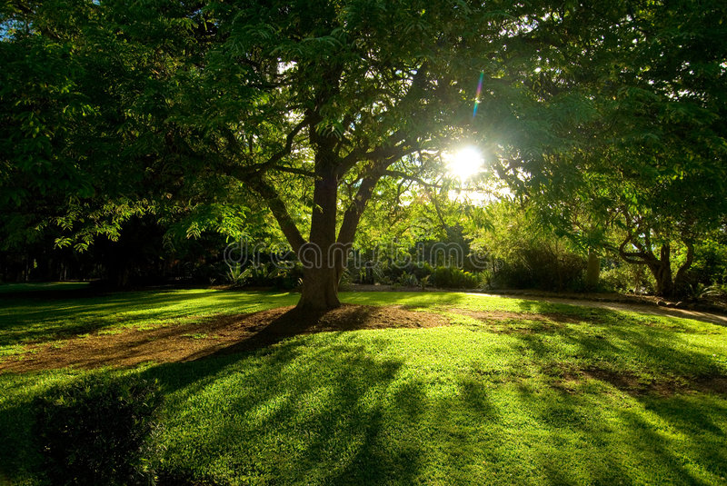 Tree and sunlight stock photography