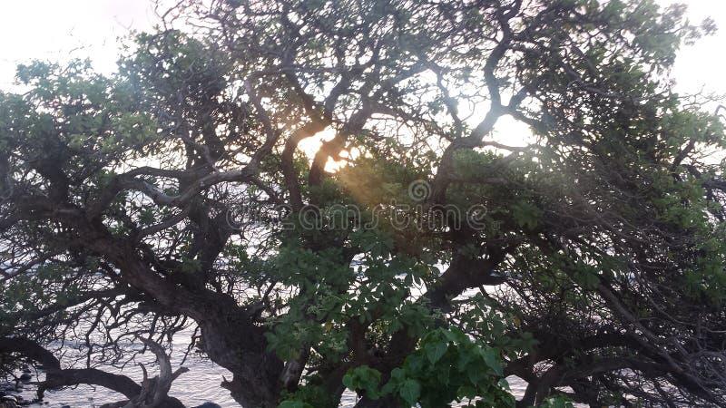 Tree at sunrise stock images