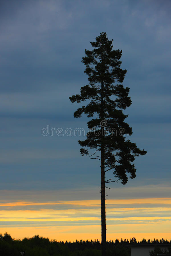 Download Tree in the sunset stock photo. Image of sunset, background - 12605870