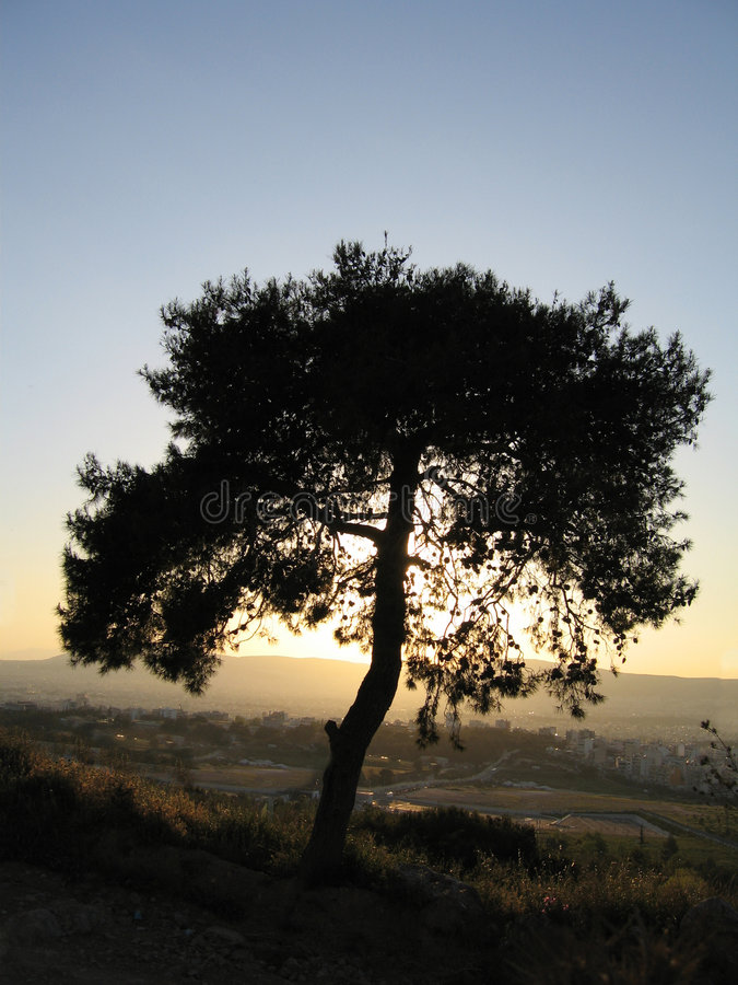 Download Tree in the sunset stock photo. Image of nightfall, greek - 181384