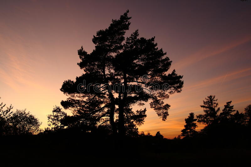 Tree in the sunset stock photos