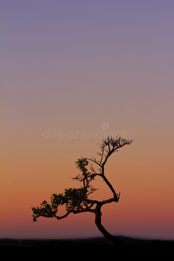 Download Tree at sunset stock image. Image of cool, open, colorful - 25231841