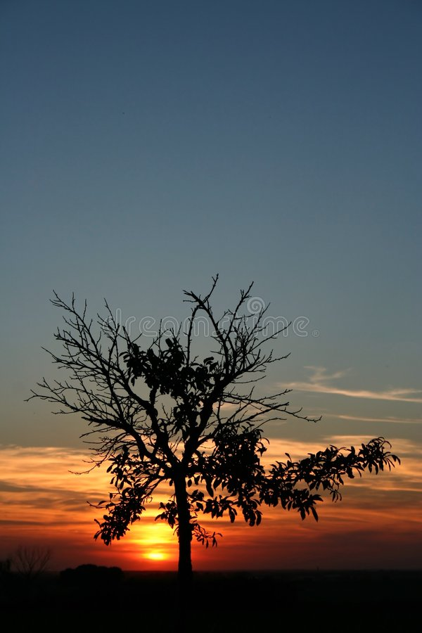 Download Tree In The Sunset Royalty Free Stock Photography - Image: 3248057