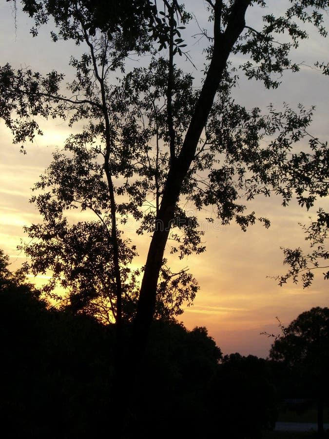 Tree sunset stock photography