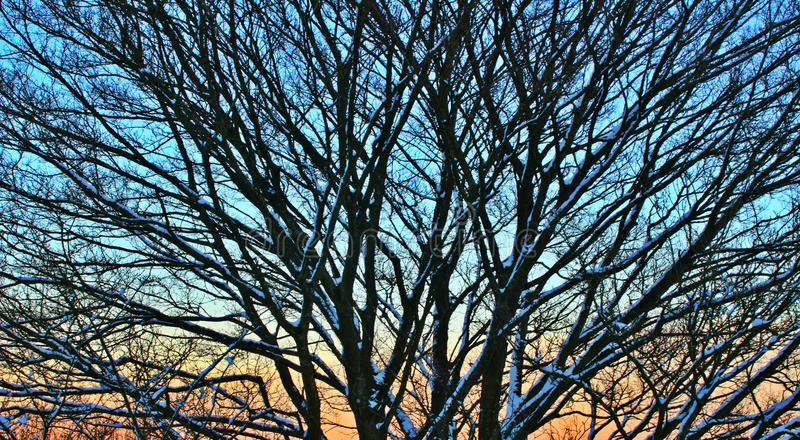 Tree in the sunset. Image of tree in the sunset covered in snow in darkness stock image