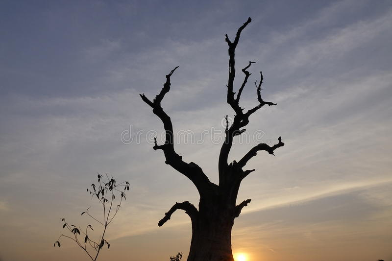 The tree in sunset. With mystery sky royalty free stock image