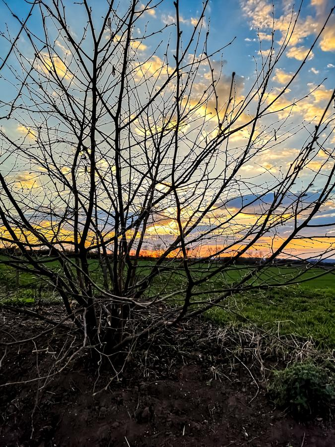 Tree in a sunset. A small tree in the sunset sundown leaves defoliated leavefree nature purenature garden sky stock photo