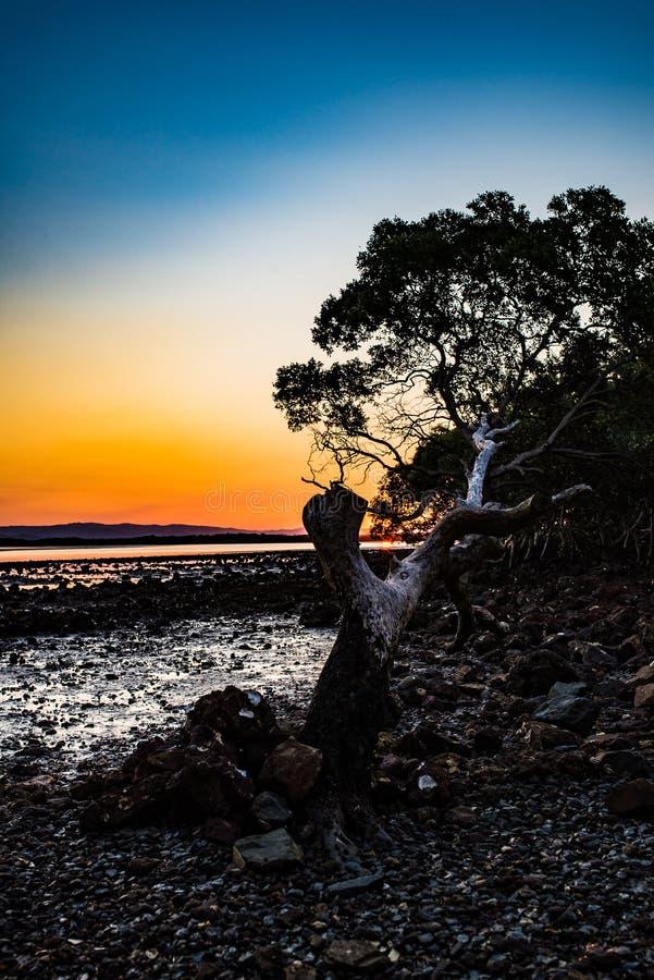 Tree in sunsett stock image