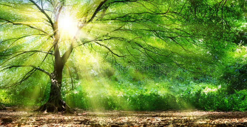 Tree With Sunshine In Wild Forest stock photography
