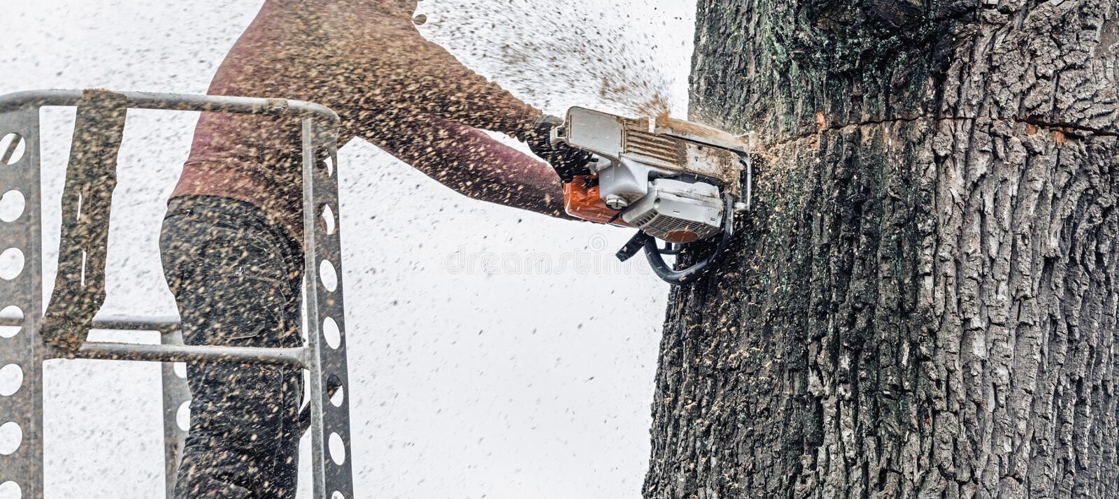 Tree surgeon in platform cutting thick tree trunk with chainsaw. royalty free stock photos