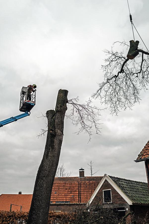 Tree surgeon in platform and large branch lifted by crane. stock photography