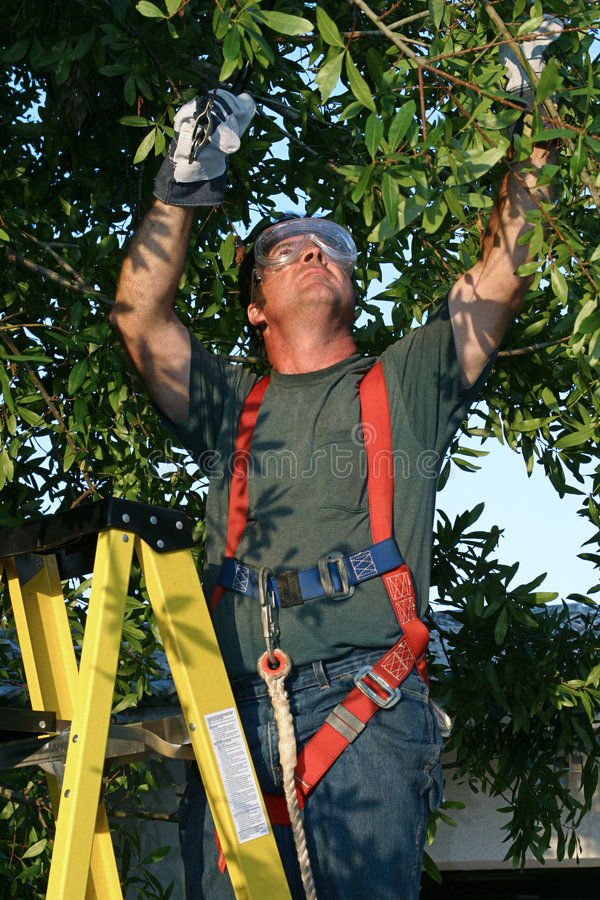 Tree Surgeon at Work royalty free stock images
