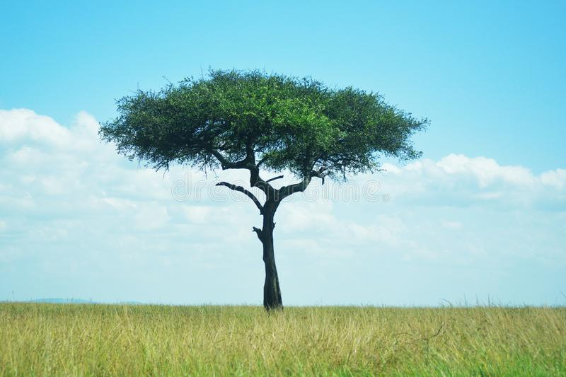 Tree Surrounded by Green Grass stock photos