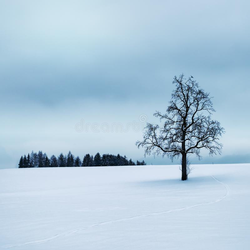 Tree Surrounded by Snow royalty free stock photos