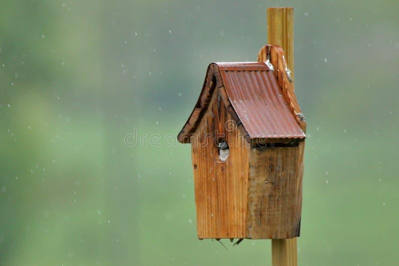 Tree Swallow Nestling stock photography