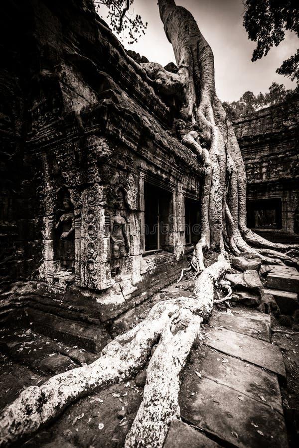 Download Tree Of Ta Prohm, Angkor Wat Stock Photo - Image: 26528912