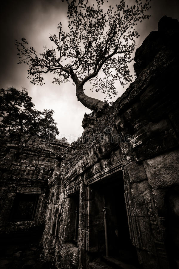 Download Tree Of Ta Prohm, Angkor Wat Stock Image - Image: 26529731
