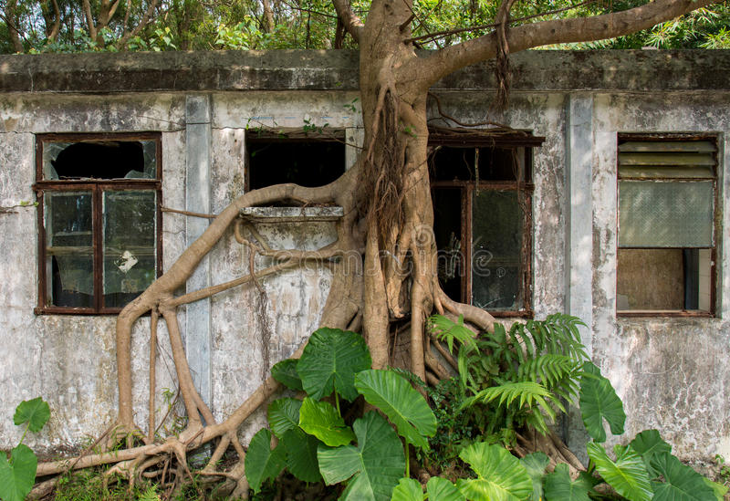Tree taking over abandoned building in Hong Kong. royalty free stock photo