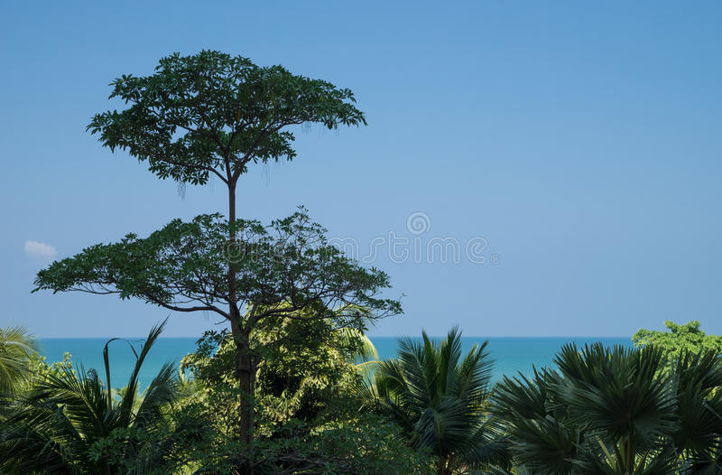 A tree taller than other. Outstanding concept, with copy space stock photo