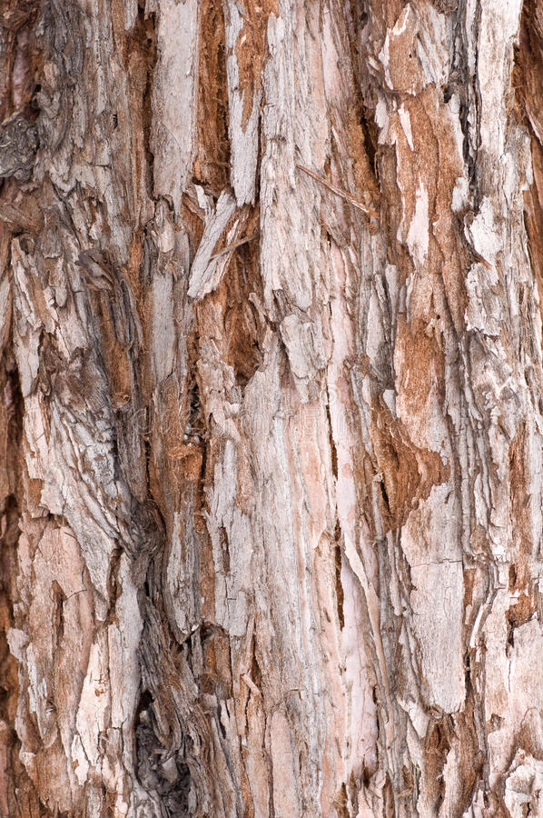 Tree texture stock photography