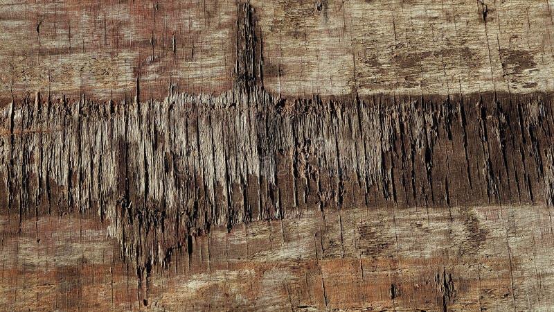 Tree texture royalty free stock photography