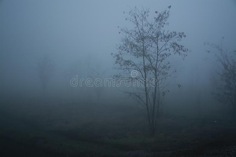 Tree in thick fog.Thick fog Railway. stock image