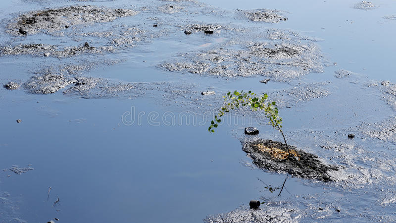 Tree threatened by oil and toxic substances, chemicals and oil. Tree threatened by oil and toxic substances, Effects nature from water contaminated with royalty free stock photos