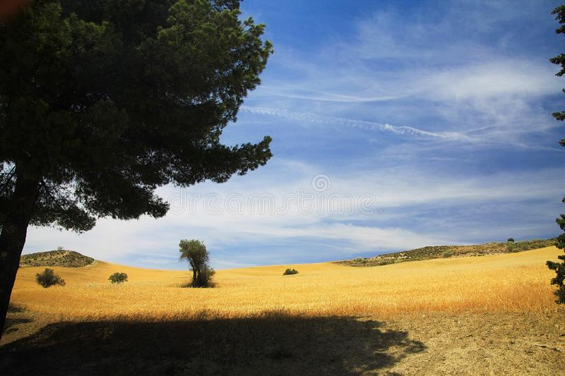 Tree throwing shadow on dry field on high plain of Sierra Nevada, province Andalusia, Spain royalty free stock images