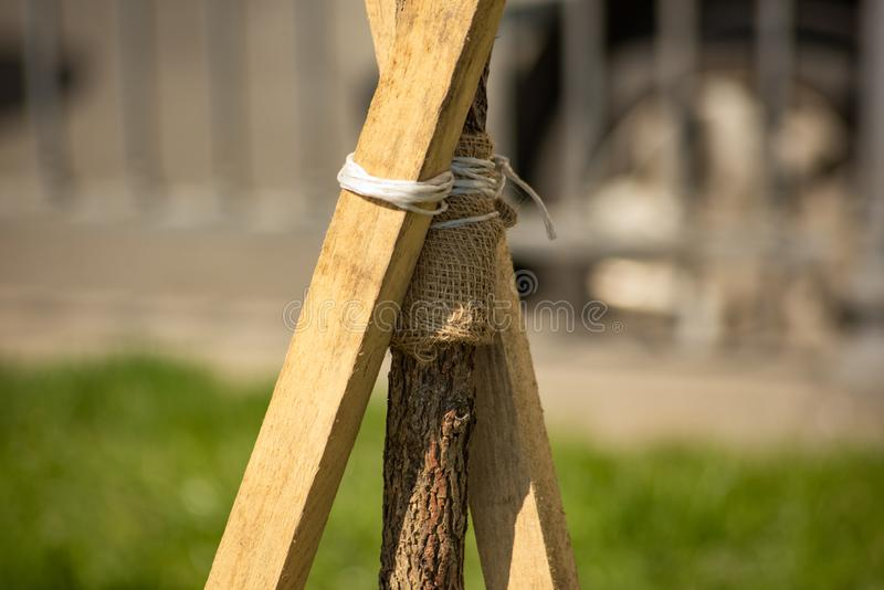 Tree tied with rope to slats. Is close, planted, young, green, grass, nature, garden, gardening, outdoor, environment, season, closeup, agriculture, growth royalty free stock photo