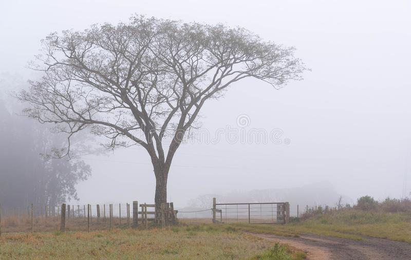 The tree at the farm gate and the Fog royalty free stock photo