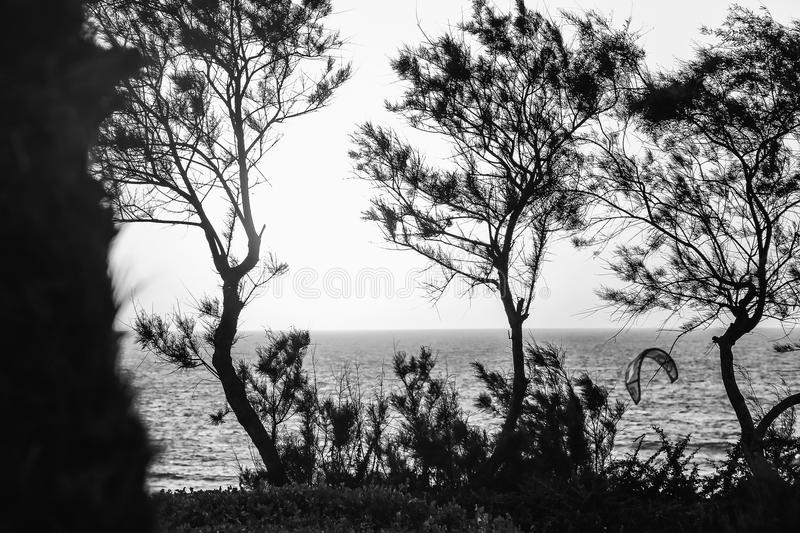 A monochrome image of trees on the background of the sea royalty free stock image