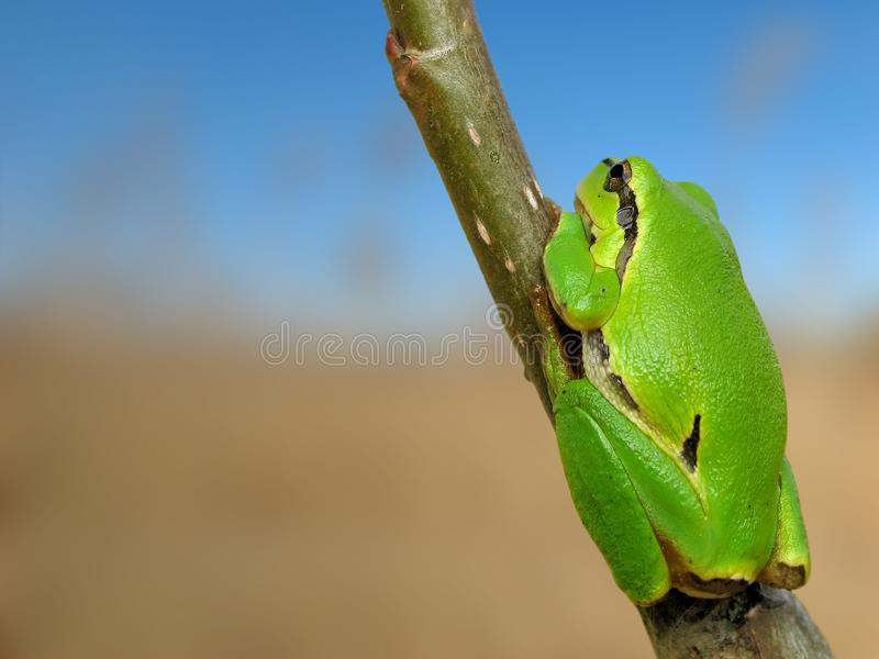 Tree toad stock images