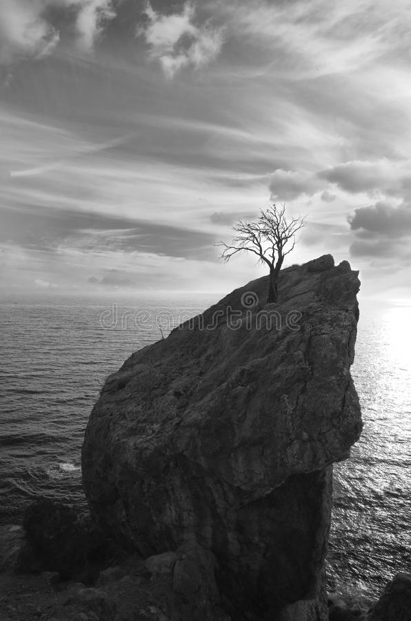 Download Tree on a top stock photo. Image of cliff, rock, light - 22344840